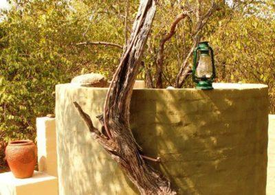Pangolin Drongo & Shrike Shared Shower