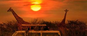 Shikwari Nature Reserve - Kruger-National-Park