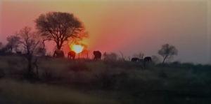Shikwari Nature Reserve - Sunset-with-Elephants