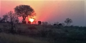 Shikwari Nature Reserve - Sunset with Elephants